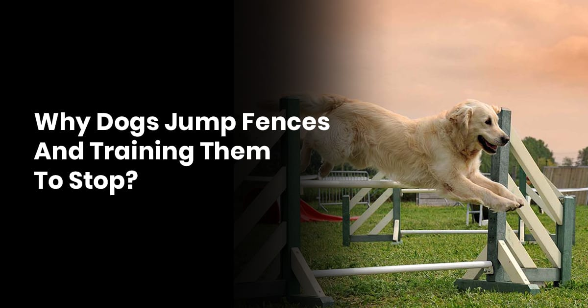Why Dogs Jump Fences And Training Them To Stop