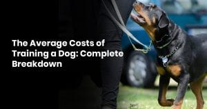 The Average Costs of Training a Dog- Complete Breakdown