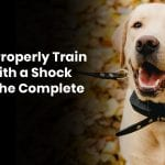 How To Properly Train A Dog With A Shock Collar: The Complete Guide