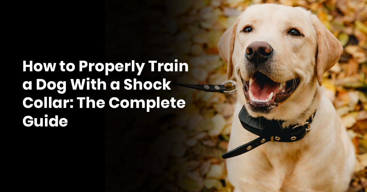 How to Properly Train a Dog With a Shock Collar- The Complete Guide