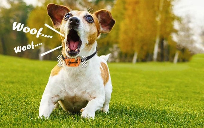 Using Shock Collar For Dog Barking