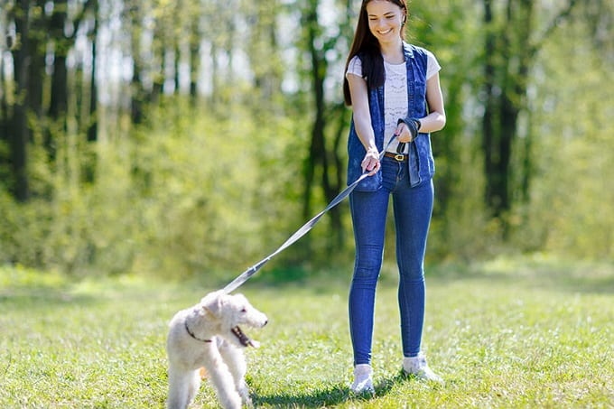 Training Dog On Leash