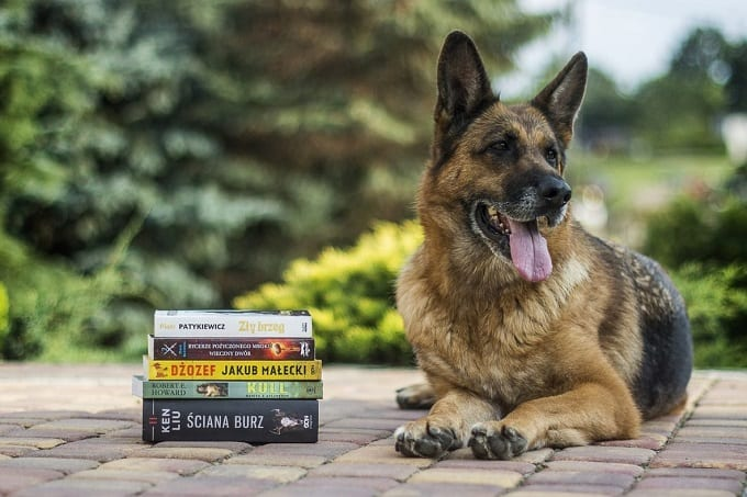 German Shepherd Laying Next to Dog Training Books