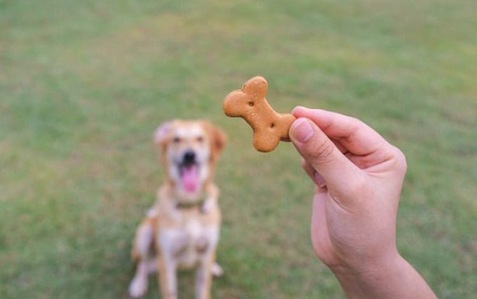 Dog Training Treat In Hand