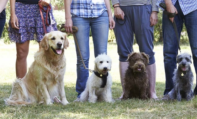Dogs With Owners On Training