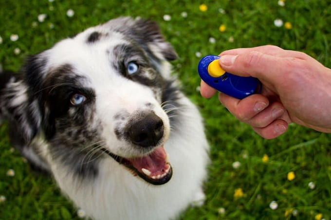Dog Training With Clicker
