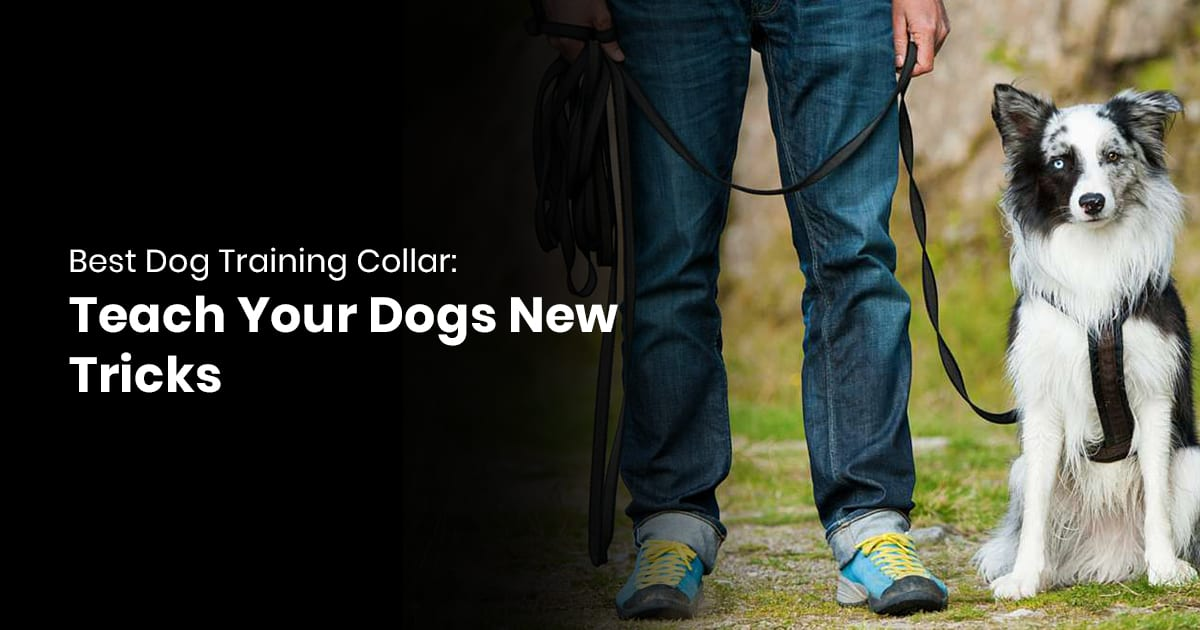 Best Dog Training Collar -Teach Your Dogs New Tricks