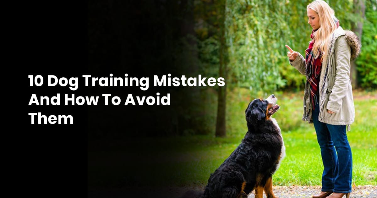 10 Dog Training Mistakes And How To Avoid Them