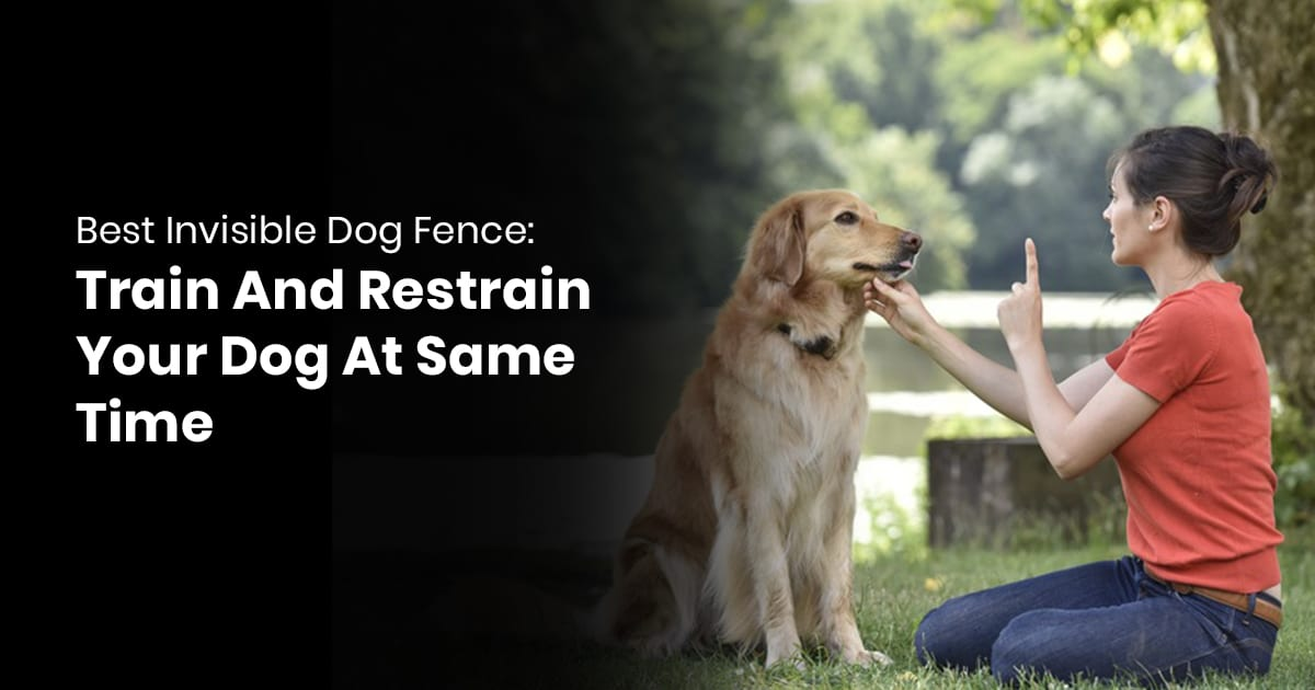 Best Invisible Dog Fence- Train And Restrain Your Dog At Same Time