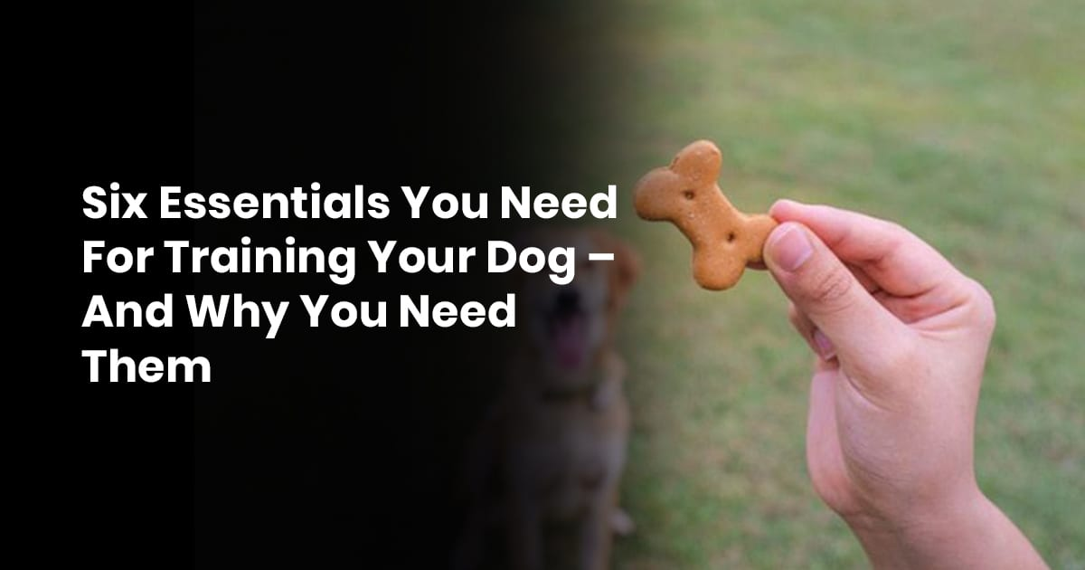 Six Essentials You Need For Training Your Dog – And Why You Need Them