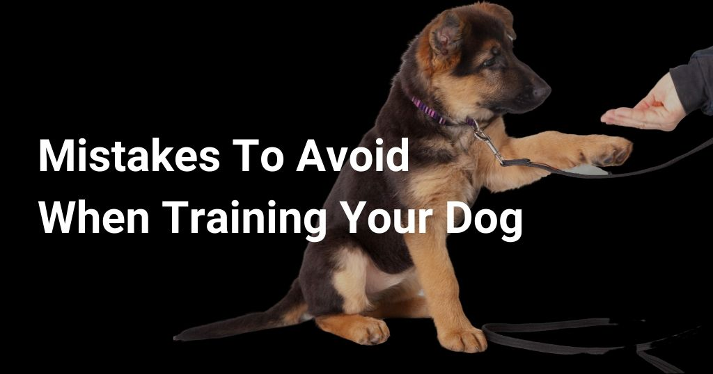 Mistakes to avoid when training your dog
