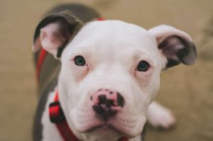The Best Magnetic Dog Collars For Arthritis