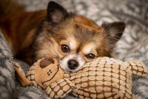 The best indestructible dog toys for small dogs