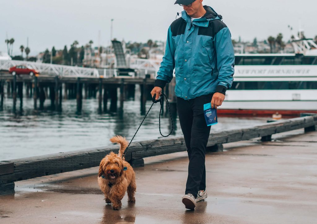 How long should I train my dog each day?
