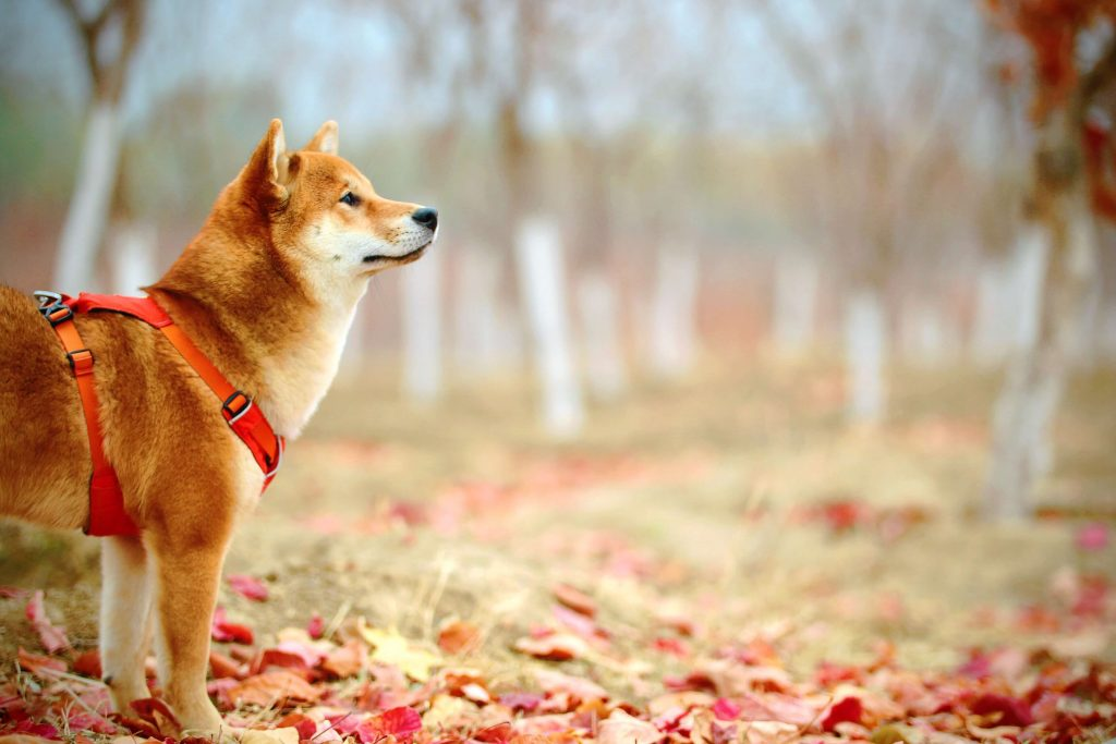 The best dog harnesses for pulling and lunging